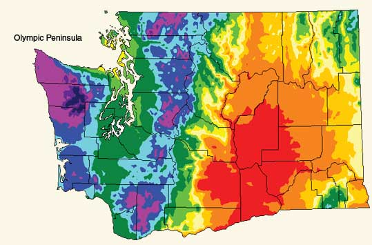 Olympic Peninsula Community Museum - Annual Precipitation Map