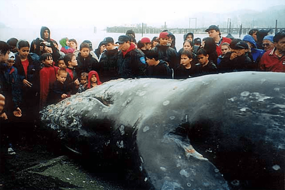 People near whale at Neah Bay, May 17, 1999