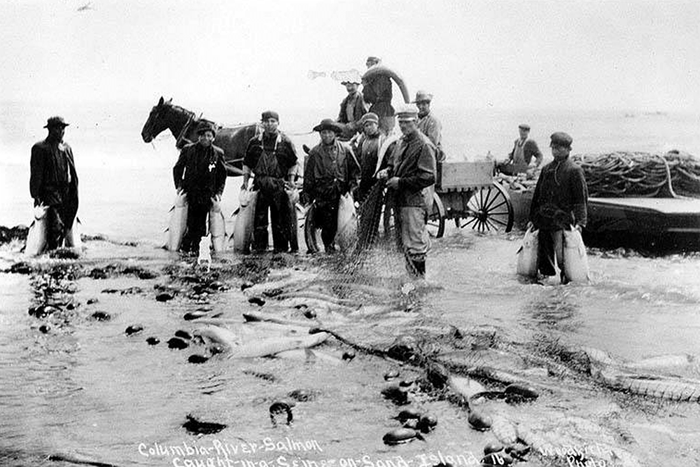 Fishermen horse seining for salmon, Sand Island, Columbia River, Oregon, n.d.