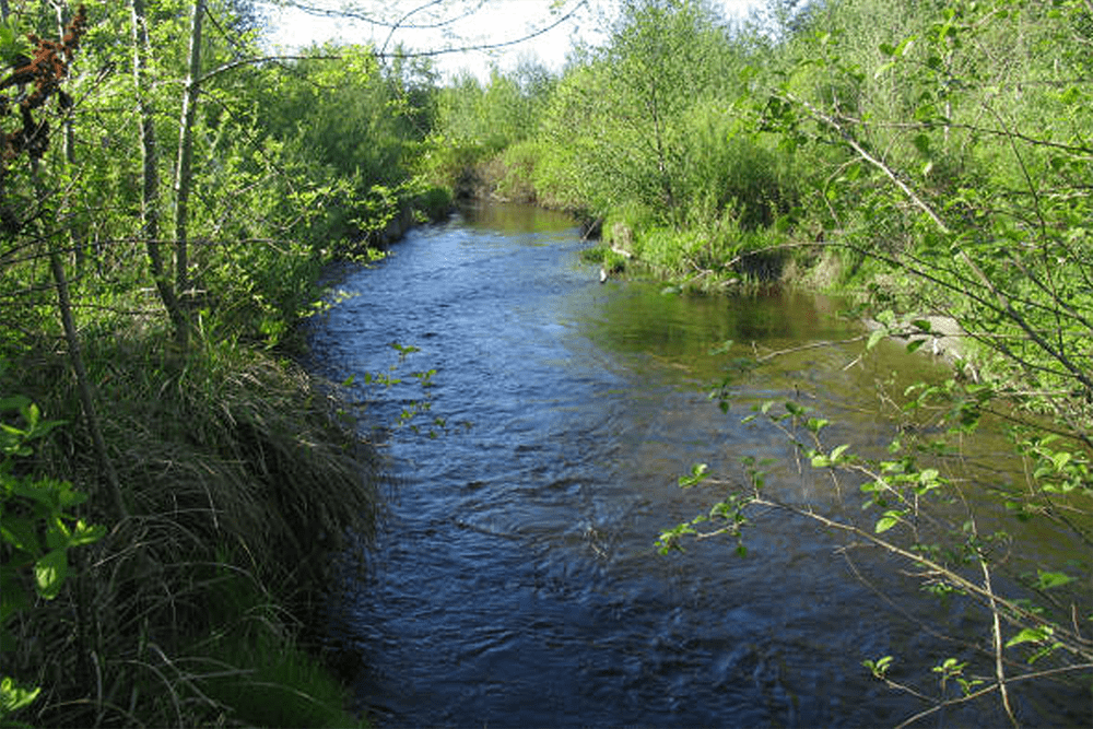 North Creek channel and green springtime vegetation