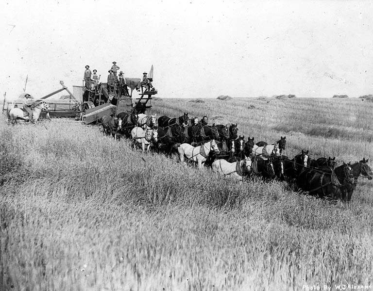 Farm workers with horse-drawn combine harvesting wheat, Almira, Washington, August 1911
